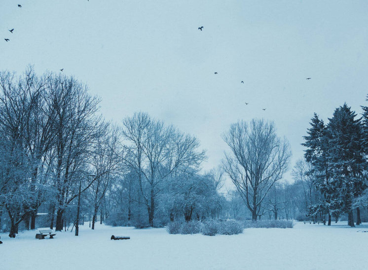 Snowy trees in Masovian District, Poland
